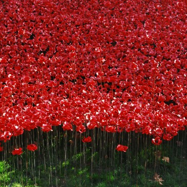 Inspired by the 888,246 ceramic poppies